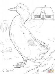 Домашняя утка