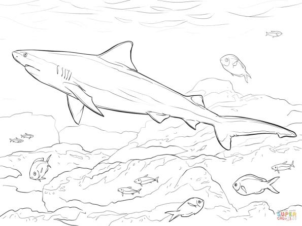 Раскраска Тупорылая акула, распечатать или скачать из ...
