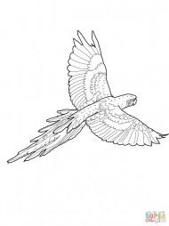Попугай Зеленокрылый ара