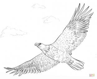 Белоголовый орлан в болоте