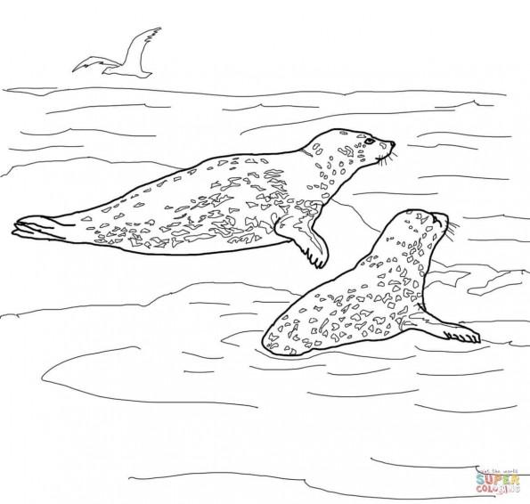 раскраска морские леопарды распечатать или скачать из