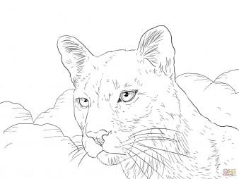 Портрет пумы