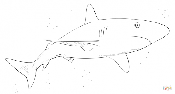 Раскраска Карибская рифовая акула, распечатать или скачать ...