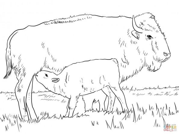 Раскраска Американский бизон с тельцом, распечатать или ...