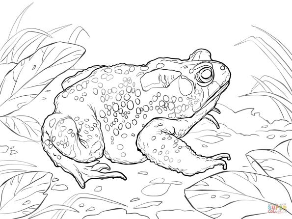 Раскраска Американская жаба, распечатать или скачать из ...