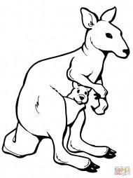 Кенгуру-мам и детёныш