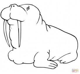 Тучный морж