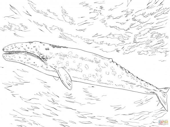 Раскраска Серый кит, распечатать или скачать из категории ...