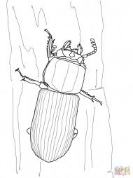 Сахарный жук
