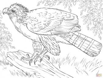 Филиппинский орёл, сидящий на ветке