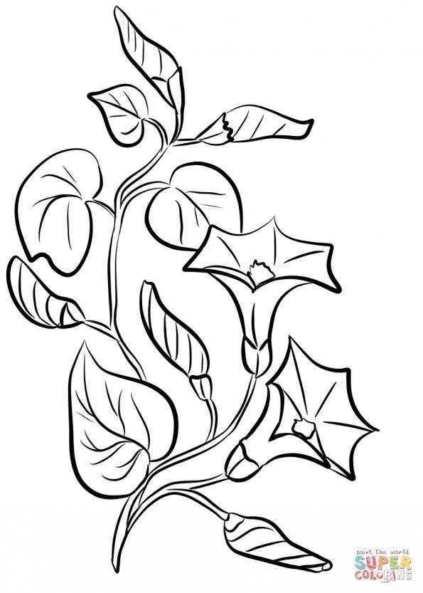 Картинки цветов колокольчиков распечатать
