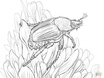 Японский хрущик на цветке