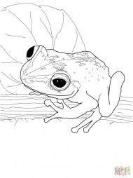Лягушка коки
