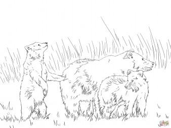 Семья бурых медведей