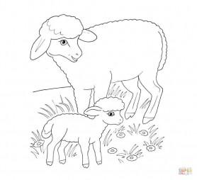 Овечка-мама и егнёнок
