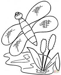 Разнокрылая стрекоза пролетает над камышами