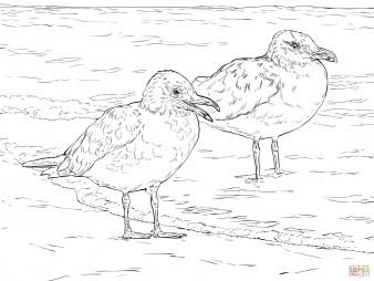 Серокрылые чайки