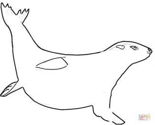Морской котик под водой