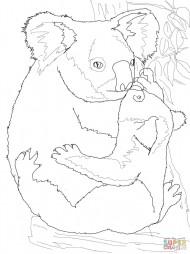 Коала-мама обнимает своего медвежонка