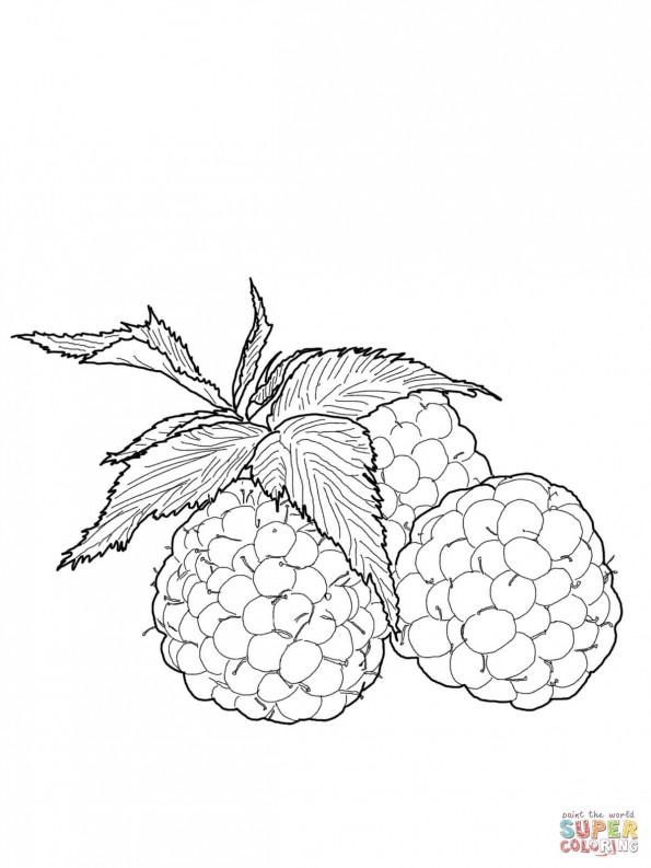 Раскраска Ягодки малины, распечатать или скачать из ...