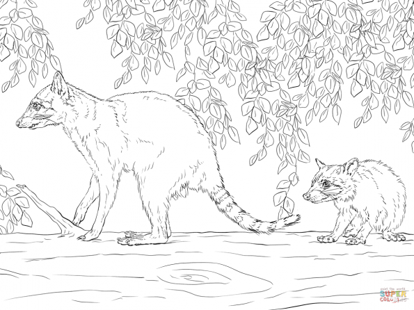 Раскраска Енот-мать и детеныш, распечатать или скачать из ...