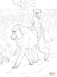 Павиан с детенышем