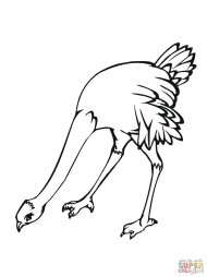 Птица страус