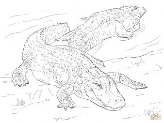 Миссисипские аллигаторы