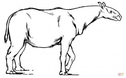 Индрикотерии - представитель рода