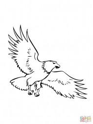 Парящий белоголовый орлан