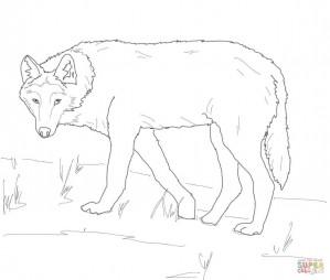 Волк на охоте