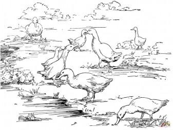 Утки у озера