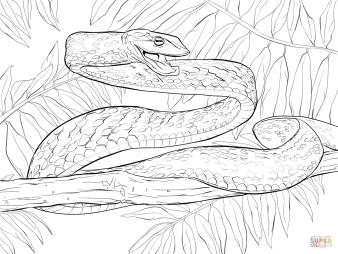 Блестящая остроголовая змея