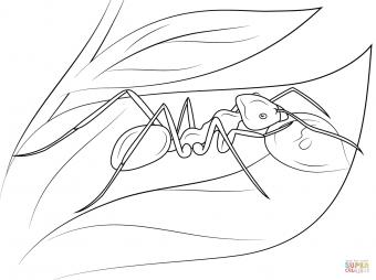 Мясной муравей