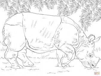 Индийский носорог на пастбище