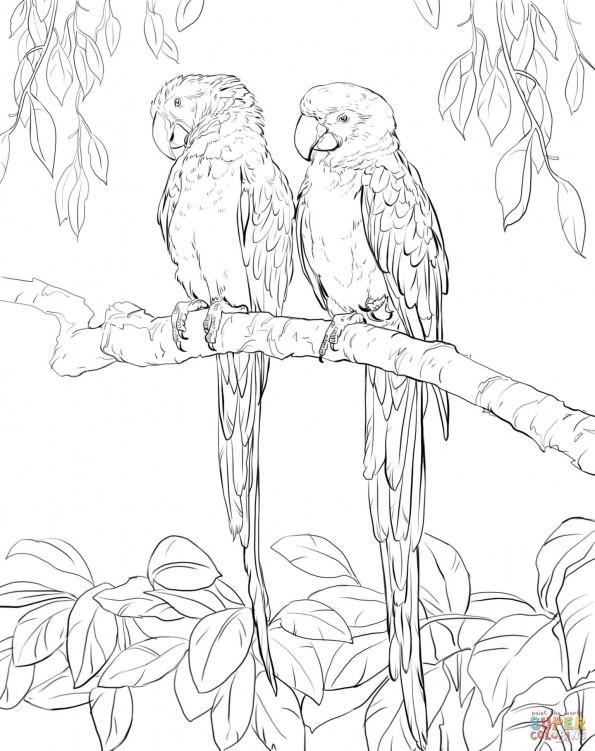 попугай ара раскраска распечатать когда-то