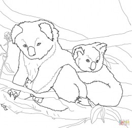 Коала-мама и детёныш
