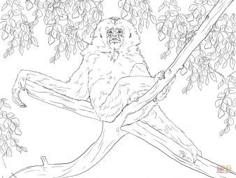 Гиббон на дереве