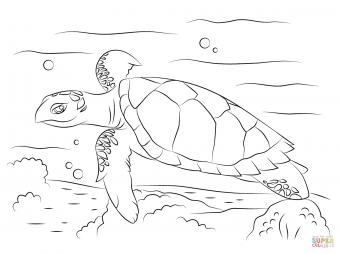 Забавная черепаха бисса