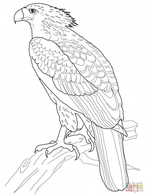 форме орел картинки из раскрасок подробные отзывы