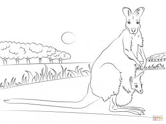 Рыже-серый валлаби с кенгуренком