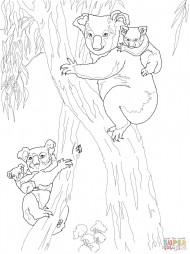 Коалы-мамы и детёныши