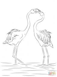 Два красивых фламинго