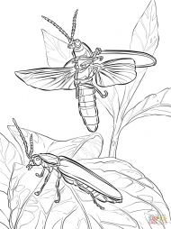 """Пасхальные светлячки"" (Photinus pyralis)"