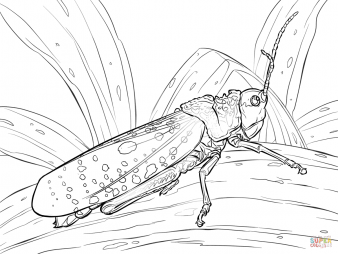 Пятнистая саранча