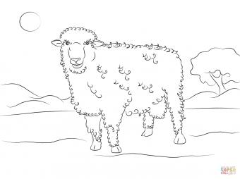Овца породы коррида