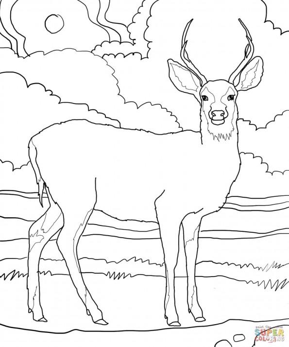 Раскраска Чернохвостый олень, распечатать или скачать из ...
