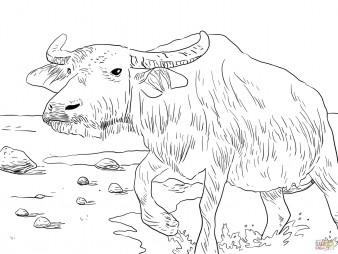 Азиатский буйвол
