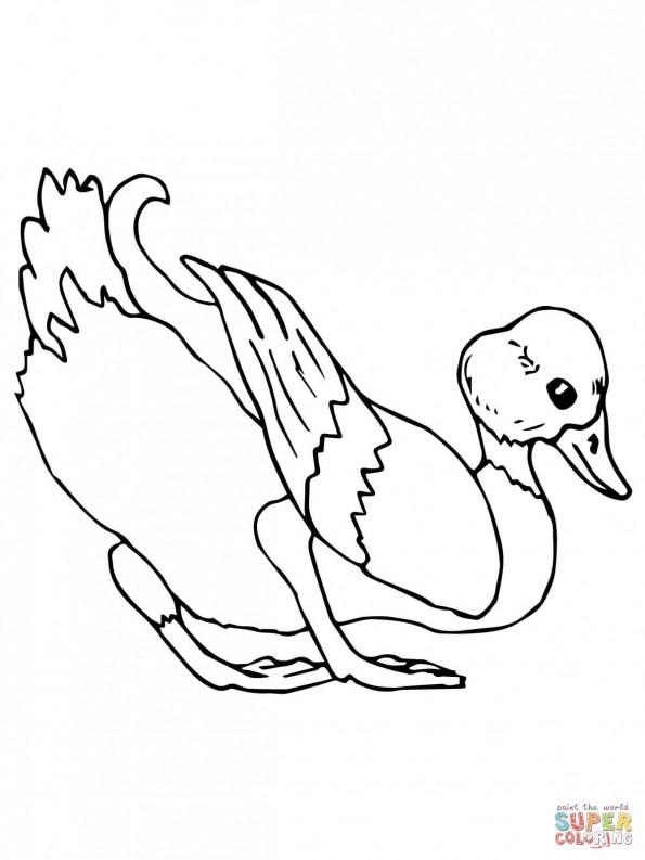 раскраска утка кряква распечатать или скачать из категории