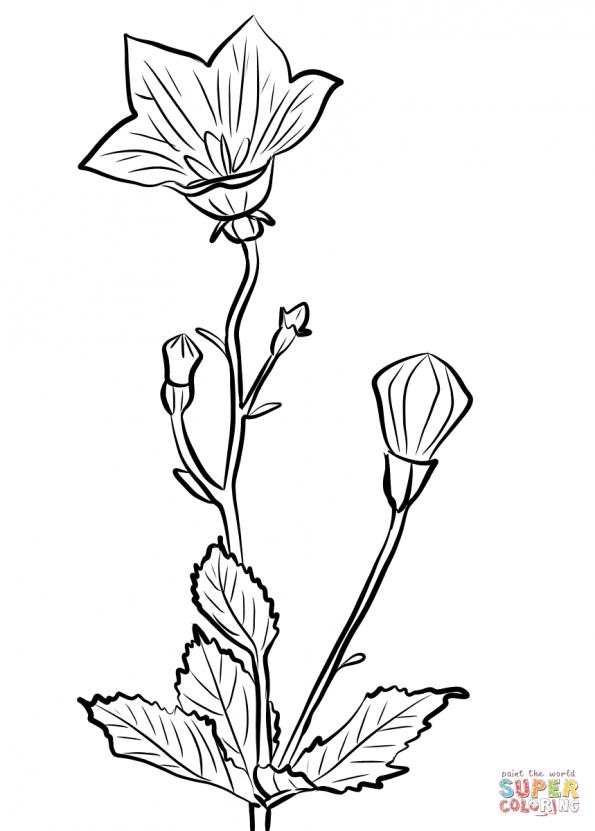 Картинка колокольчик цветок для детей раскраска